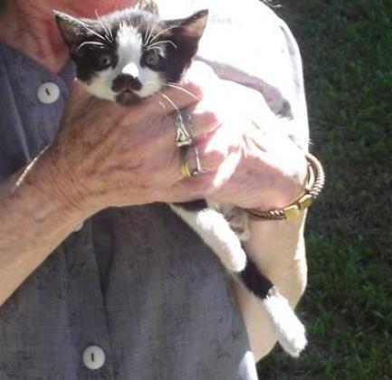 Kittens needing loving home