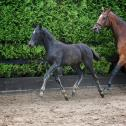 Outstanding! Strong and healthy Horses Availble for sale