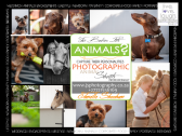 Animal Photographer-Your Fur baby Photographer