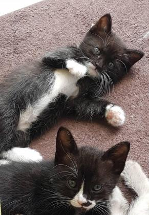 2 lovely kittens looking for home