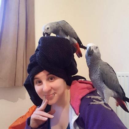 Extremely Healthy Red Tail African Grey Parrots