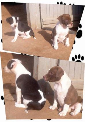 Puppies Puppies