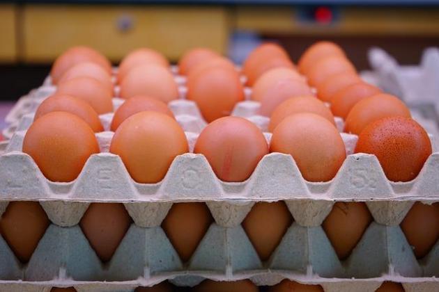 fresh eggs for sale