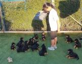 Rottweiler Puppies Available For Sale!