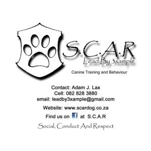 Dog/Puppy School