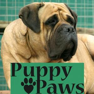 Puppy Paws Bullmastiffs