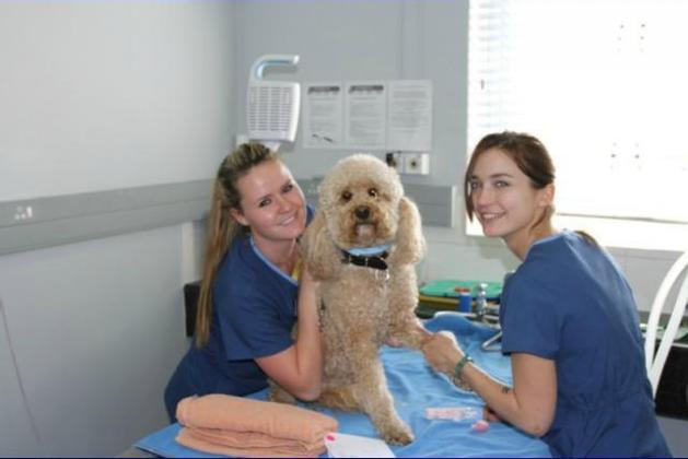 Bryanston Veterinary Hospital