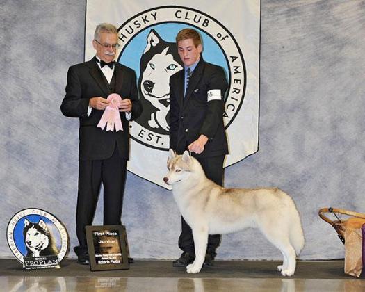 Denalibelay Siberian Huskies