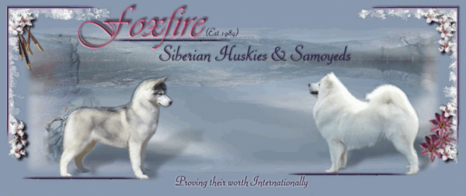 Foxfire Siberian Huskies