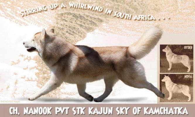 Kamchatka Siberian Huskies