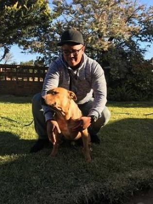 Pitbull Kennels MANJARO
