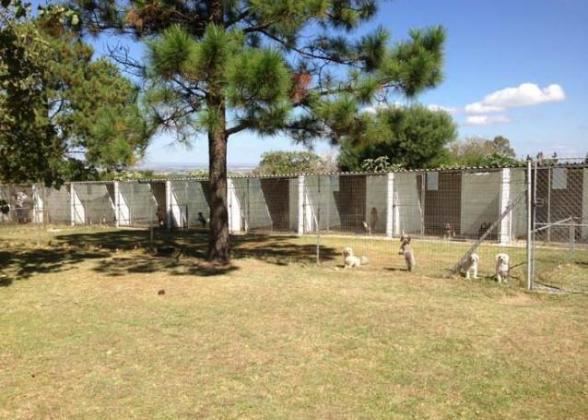 Sun Valley Kennels and Cattery
