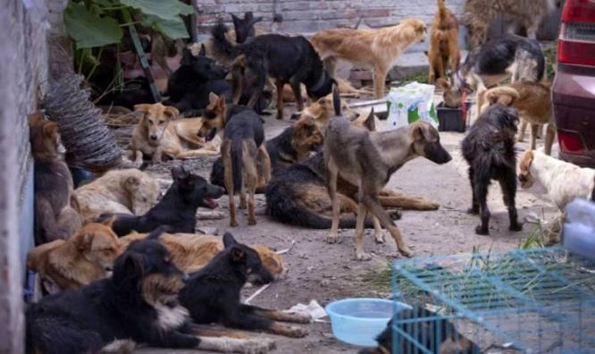 The fight against rabies in Northern China