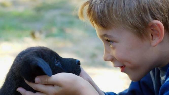 Why using baby-talk improves our bond with dogs