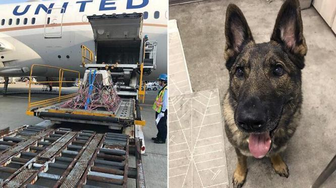 Dog mistakenly sent to Japan by United gets a private jet home