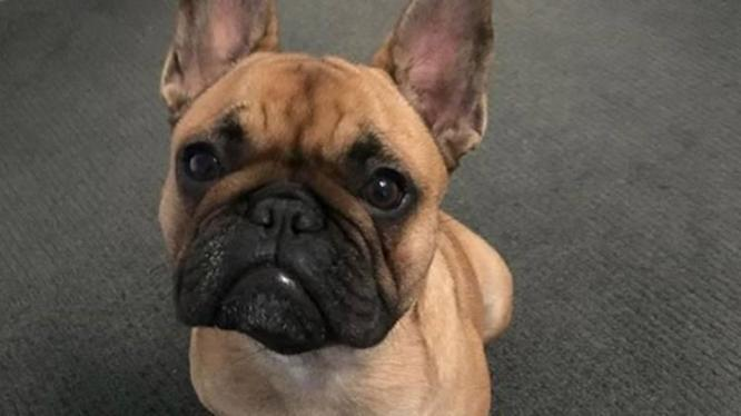 The Actor Matt Wilson stolen dog found in Melbourne