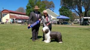 Merrymead Bearded Collie Kennel
