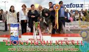 Lions Caucasian Shepherd Kennel