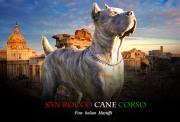 San Rocco Cane Corso