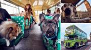 London Launches the Worlds First Bus Tour for Dogs