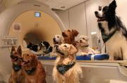 Dogs hear our words and how we say them