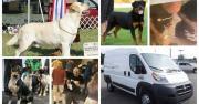 Van Carrying 15 Show Dogs Stolen from Parking Lot in Redding