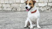 Pet theft to be considered for debate after petition UK