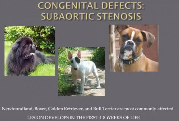 Congenital Defects in Dogs