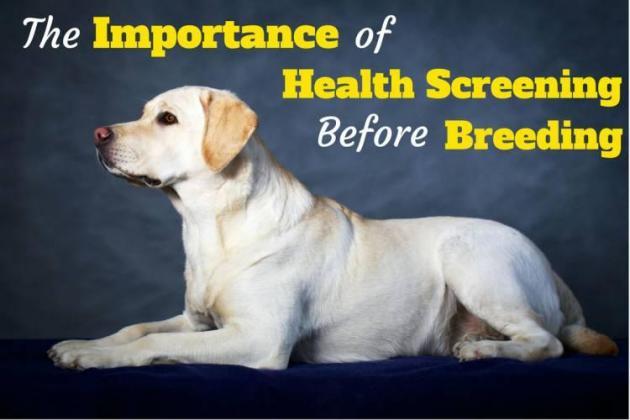 Top 5 Genetic Diseases in Dogs