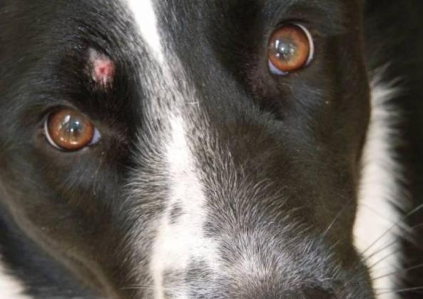 Ringworm in Dogs, Diagnose, Treat and Prevent