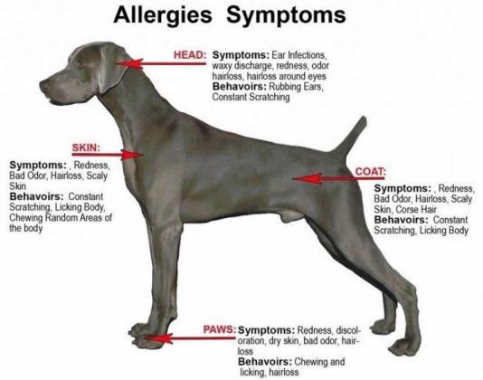 Skin Mite Dermatitis in Dogs