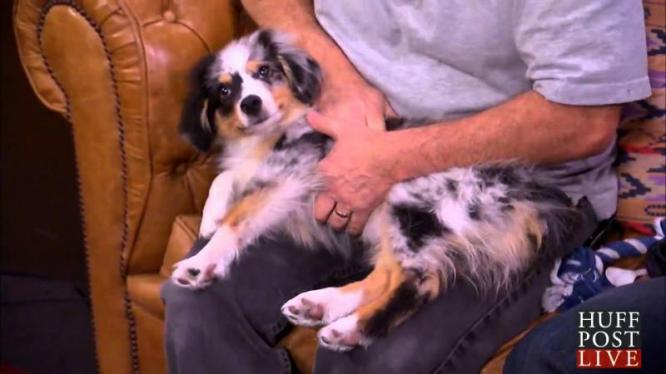 Save your Dog with the Heimlich Maneuver
