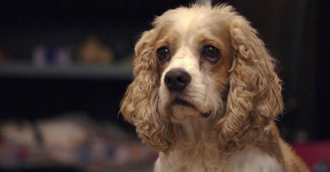 10,000 dogs for the largest-ever study on aging in canines