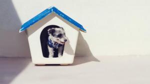 Dog poisoning alert for Milnerton