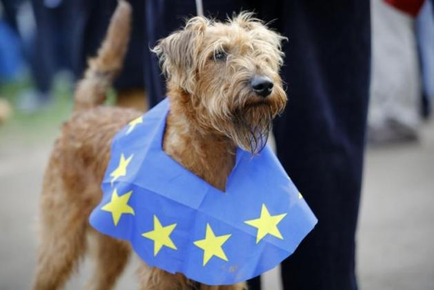 What being an unlisted country would mean for Britain's dogs and cats after the Brexit transition period