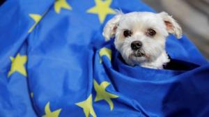 What being an unlisted country would mean for Britain's dogs and cats after the Brexit transition