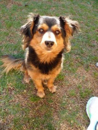 Pug male & Mix breed female Give away